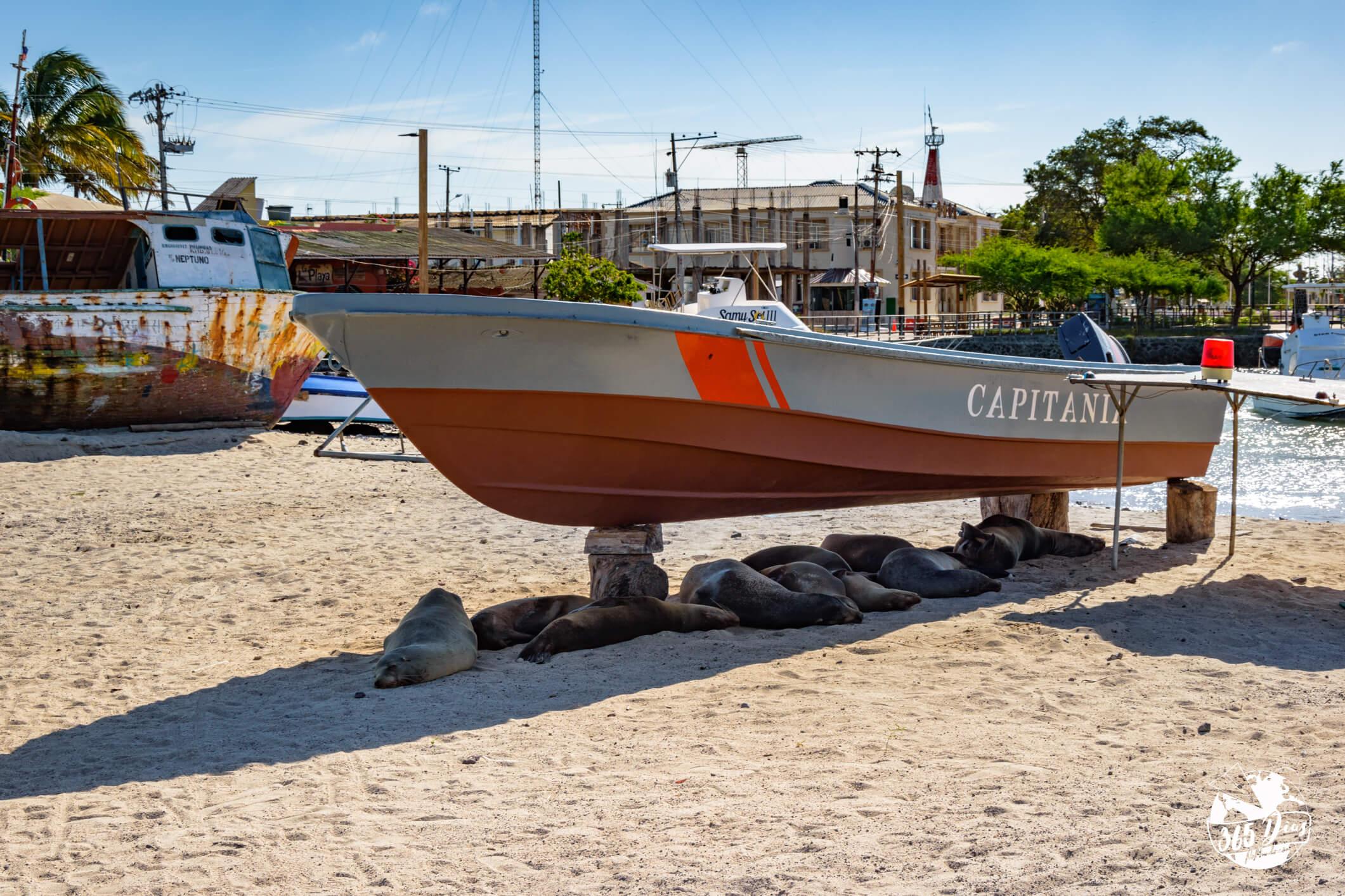 Top Galápagos