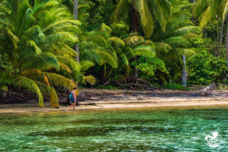 Palm_trees_bocas_toro